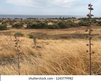 Puru Kambera savannah in Sumba island, East Nusa Tenggaram Indonesia