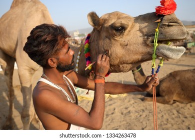 PUSHKAR, INDIA - NOVEMBER 11, 2018: Unidentified Gypsy man decorates a camel for the show at the Pushkar Camel Fair, Rajasthan. The fair is the largest camel fair in India.