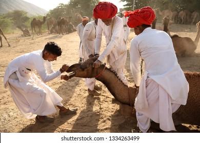 PUSHKAR, INDIA - NOVEMBER 12, 2018: Unidentified Rabari tribal men from Gujarat at the Pushkar Camel Fair, Rajasthan. The fair is the largest camel fair in India.
