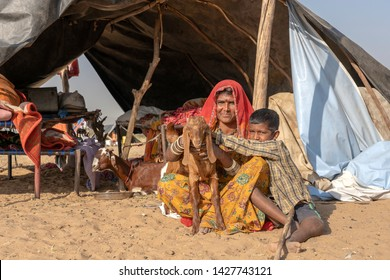 PUSHKAR, INDIA - NOVEMBER 13, 2018 : Indian family together with a goat lives in a hut in the desert on time Pushkar Camel Mela near holy city Pushkar, Rajasthan, India