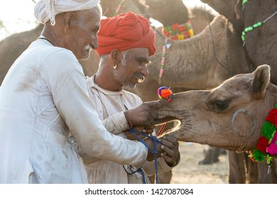 PUSHKAR, INDIA - NOVEMBER 14, 2018 : Indian men and herd camels in desert Thar during Pushkar Camel Mela near holy city Pushkar, Rajasthan, India. This fair is largest camel trading fair in the world
