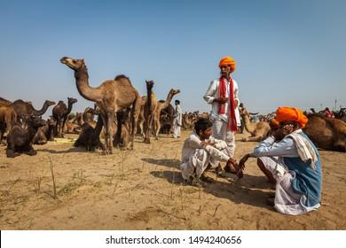 PUSHKAR, INDIA - NOVEMBER 20, 2012: Indian men in traditional turbans and camels at Pushkar camel fair Pushkar Mela annual camel livestock fair one of world largest camel fairs and tourist attraction