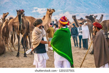 Pushkar, India - November 20, 2015. Showing a sale of a camel herd at the Pushkar Camel Fair in Rajasthan, India, with the buyer and seller shaking hands.
