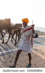 Pushkar, Rajasthan/India - Oct 2017 : Camel Traders taking their camels on sand of camel fair ground for selling camels