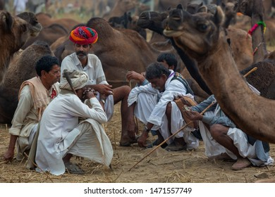 PUSHKAR,INDIA - Circa November 2014 : Unidentified Cameleer sits and stands around their livestock animals and waits for clients to sell them