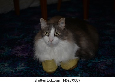 Puss in Boots. Cat With Shoes