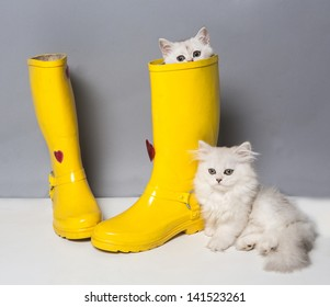 Pussy of british cat in yellow gumboots