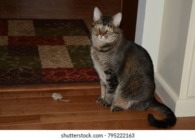 Pussy cat posing for photo inside house and looking frisky