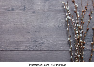 Pussy willow branches on grey wooden background. Willow twigs in early spring. Flat lay, top view with empty space.