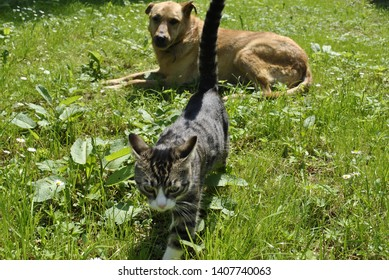 the pussycat and dog in park