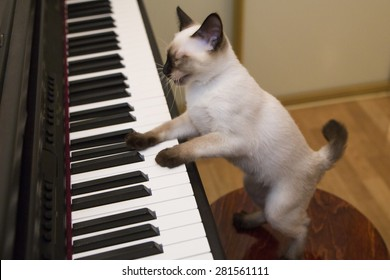 Pussycat plays the piano with its paws