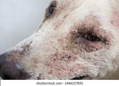 Dogs Dermatitis Images, Stock Photos & Vectors | Shutterstock