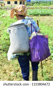 Putatan, Malaysia-Aug 11,2018: An elderly woman who is 74 years old and still fit as a fiddle due to her dependence on nature and lack of dependence on oily food carries her heavy load alone.