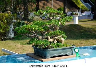 PUTRAJAYA, MALAYSIA -AUGUST 25, 2018: Bonsai tree display for public in Royal Floria Putrajaya garden in Putrajaya, Malaysia.