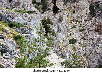 puzzle: can you find all 5 mountain goats on the photograph?