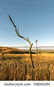 Pylons in Field - Landscape Photography