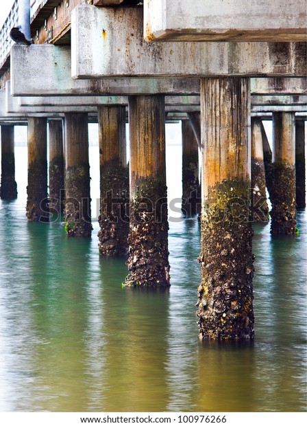 Pylons of a Fishing Pier covered in Barnacles in San Diego Bay, San Diego Southern California, West Coast USA