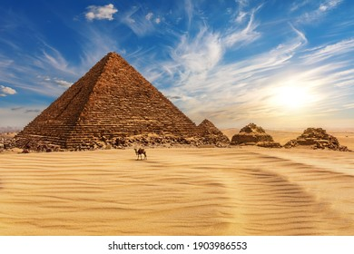 The Pyramid of Menkaure at sunset and a camel nearby, Egypt, Giza