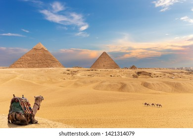 The Pyramids and camels, beautiful Giza desert view
