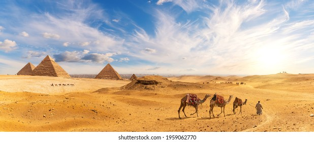 Pyramids of Egypt and a bedouin with Сamel caravan, sunset panorama, Giza