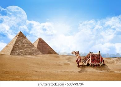 Pyramids Egypt with Camel