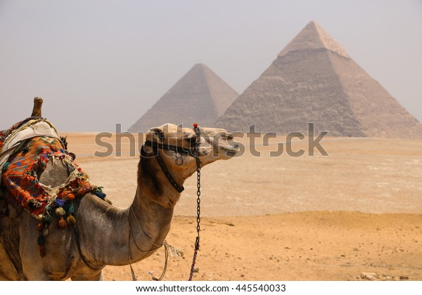 The Pyramids of Giza with a Camel