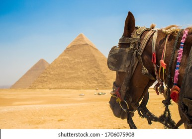 Pyramids of giza with a horse in the front In Giza In Egypt