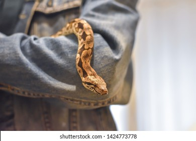 python on the arm, snake on the arm, man holds the python, python close-up