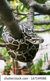 Python on a bench.