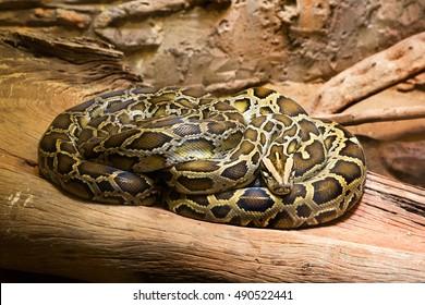 Python Zoo