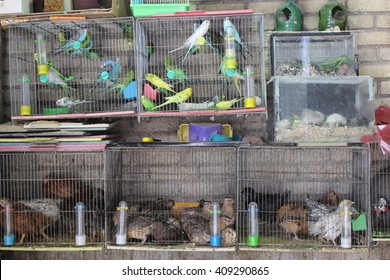 Qazvin, Iran, June, 2014, Birds cages in the bird selling section of the historical market place (Bazaar) of Qazvin city , June 19, 2014. Qazvin, Iran. editorial use only.
