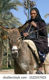 Qena, Luxor / Egypt - 02 02 2010: Donkeys are much used as traditional transport in many villages outside big cities