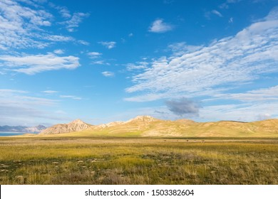 qinghai three river sources core region landscape, tibetan gazelles and plateau meadow prarie against a blue sky, China