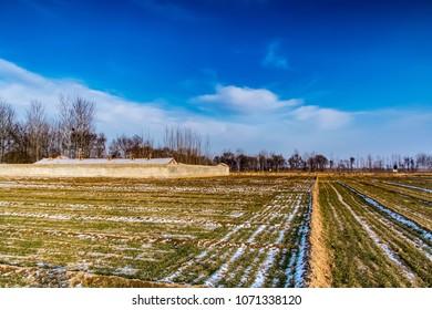 Qingyang County, Puyang City, Henan Province, rural pastoral environment landscape