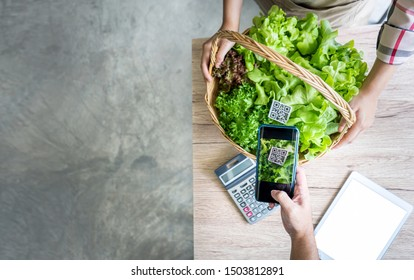 QR Code scanner buying hydroponics vegetables on basket in market greenhouse, Organic farmer working technology with Smartphone payment and shopping digital cashless society, Online farmers business
