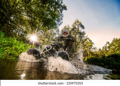 Un quadruple coureur à travers le courant d'eau dans la forêt contre la lumière du soleil.