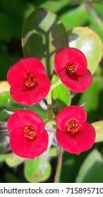 Quadruplet flowers
