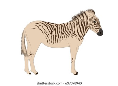 quagga made out of contour and flat color
