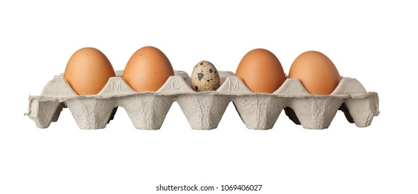 A quail egg in the middle of a tray of eggs isolated on white background