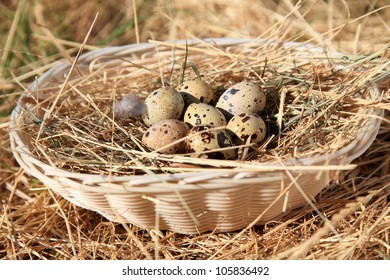 quail eggs against hay in a basket