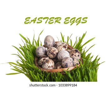 quail eggs in basket between green grass. isolated on white background