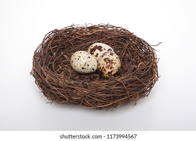 Quail eggs in birds nest isolated on white background