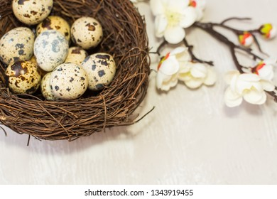 quail eggs in the nest and a flowering branch. the view from the top. happy Easter card