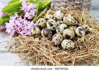 Quail eggs on hay