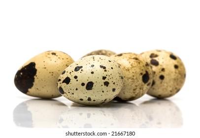 quail eggs on white background
