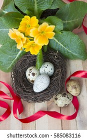 Quail eggs in the twig nest on the primrose background