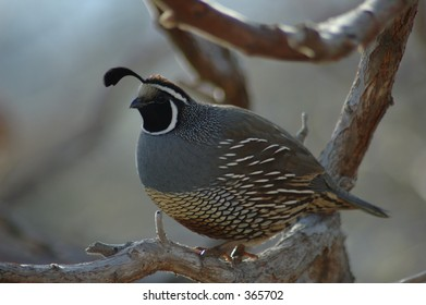 quail sitting on the tree
