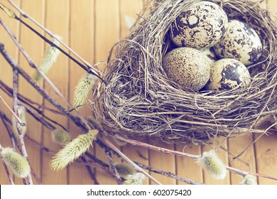 Quails eggs in nest, pussy-willow branches on wooden background.