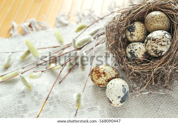 Quails eggs in nest, 