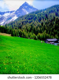 Quaint Austrian high alpine chalet near Gargellen -  lush green meadow with yellow wildflowers. The rugged Austrian Swiss Alps &  evergreen trees with a hint of incoming fall Colors are added charms.